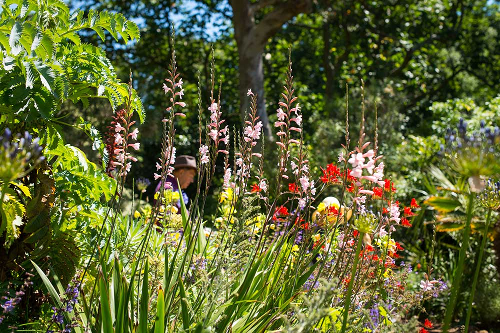 Abbotsbury Subtropical Gardens Mediterranean Bank in full bloom